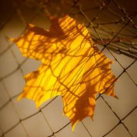 Autumn. Nature in yellow